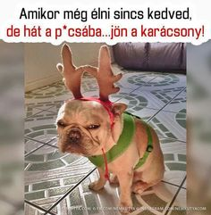 """This is up there with the Boston wearing the pink bunny costume quoting """"I hate everything"""" Pink Bunny Costume, I Hate Everything, Funny Jokes, Hilarious, French Bulldog, Funny Animals, Have Fun, Funny Pictures, Lol"""