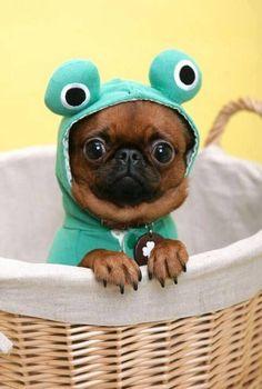 Disfraz de rana. Ojos saltones.