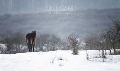 Divoký kun, wild horse Wild Horses, Mountains, Nature, Photography, Travel, Animals, Pictures, Naturaleza, Photograph