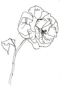 Rose Nr. 135