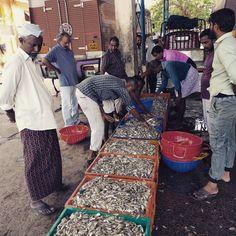 #lonja de #pescado en #cochi #kerala #india #fish #fishing #pescadores #pescador #arabiansea