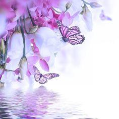 Fototapeta Zmywalna Bukiet z białych i różowych róż, Motyl. kwiatów w tle. 365 dni na zwrot ✓ Miliony wzorów ✓ 100% ekologiczny druk ✓ Profesjonalna obsługa i doradztwo ✓ Skonfiguruj online!