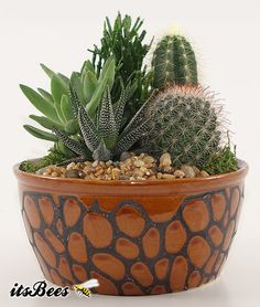"Small Cactus Garden - 7"" Earth tone colored ceramic container - Perfect Table Setting, Centerpiece, Gift"