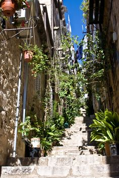 Dubrovnik, utacarészlet Dubrovnik, Plants, Plant, Planting, Planets