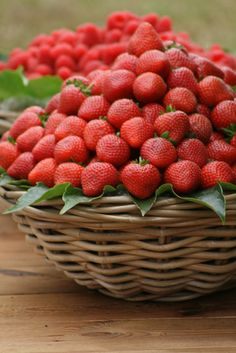 Strawberries - Tuscany, Italy