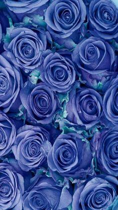 895 Best Blue Roses Images In 2020 Blue Roses Blue Rose