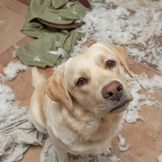 5 Things You're Doing To Make Your Dog Misbehave   WOOFipedia by The American Kennel Club