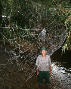 World's biggest, strongest spider web.  Not sure I want to meet this spider!