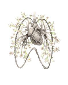 heart. lungs. pulmonary tree.