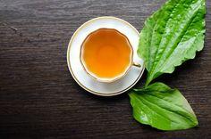 Natural Herbal Living - Holistic health, healing, and herbalism. Tea Recipes, Mexican Food Recipes, Holiday Recipes, Healthy Skin Tips, Healing Herbs, Peta, Home Remedies, Aloe Vera, Tea Time