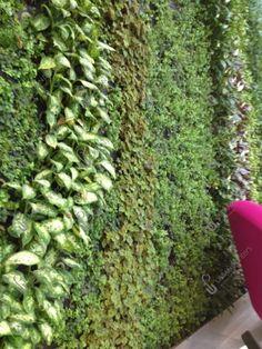Fixed Living Walls - Urban Planters Urban Planters, Living Walls, Green Walls, Live Plants, Wall Spaces, Indoor, Design, Interior, Plant Wall