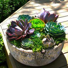 #succulent #art #nature #inspiration #potd #naturelovers #flower #decor #garden  #plants #green #earth #cactus #landscape #trendsora #usa #exotic
