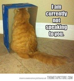 30 Funny animal captions - part funny meme pictures, funny memes, animal memes, animal pictures with captions Funny Animal Memes, Funny Cat Videos, Cute Funny Animals, Funny Animal Pictures, Funny Cute, Cute Cats, Meme Pictures, Hilarious Pictures, Funny Kitties