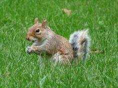 US green spaces, us parks, central park, boston, university of pennsylvania, etienne benson, squirrels, us squirrels,