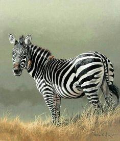 Works of Caforio Fuz photos) Wildlife Paintings, Wildlife Art, Animal Paintings, Zebra Drawing, Zebra Painting, Wild Animals Pictures, Animal Pictures, Animals And Pets, Cute Animals