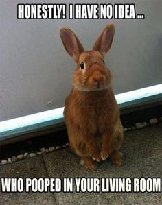 En lille uskyldig kanin bandit