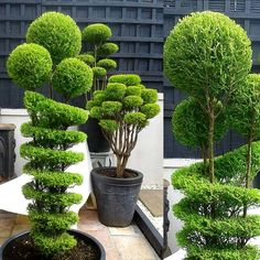 Wondering How Bonsai Trees Are Made? Garden Yard Ideas, Garden Deco, Backyard Garden Design, Garden Landscape Design, Garden Projects, Garden Art, Topiary Plants, Topiary Garden, Topiary Trees