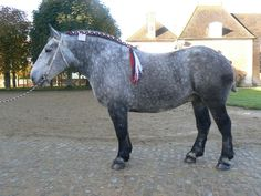 - Equine Percheron Society of France
