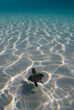 Sea Turtle Wallpaper, Ocean Wallpaper, Animal Wallpaper, Baby Animals Super Cute, Cute Little Animals, Cute Funny Animals, Baby Animals Pictures, Cute Animal Photos, Marinha Wallpaper