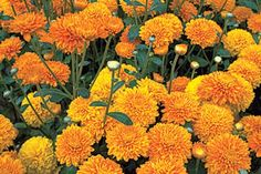 Pair these flowers and herbs with your favorite garden growers to improve soil, increase propagation, and keep harmful insects at bay—all without the help of chemicals