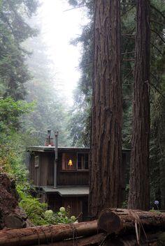 greenlikebathwater: Forest Cabin, Big Sur, California