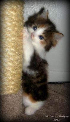 I bet this is what my rescue Miss Freddie looked like as a baby !!!