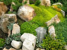 on rocks to discover how you can grow your own moss for your garden