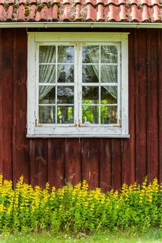 Sweden House, Red Houses, Window Dressings, Scandinavian Living, Small Farm, Country Life, Farm House, Summer Beach, Windows