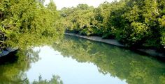 Sundarbon -World largest Mangrove Forest Its a very attractive Tourist destination in Bangladesh. http://ticketalltime.com/