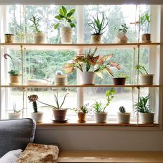 Window Shelf For Plants, Window Shelves, Indoor Window Planter, Shelves With Plants, Indoor Plant Shelves, Corner Plant Shelf, Open Shelves, Large Plants, Cool Plants