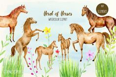 Watercolor Clipart Herd of Horses By Cornercroft