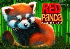Игровой автомат Red Panda Paradise с выводом денег  Главной героиней аппарата Red Panda Paradise стала малая панда. Этот автомат от компании Genesis Gaming получил 5 барабанов и 243 игровые линии. С выводом денег из него вам помогут бонусные вращения, а также Wild и Scatter. Red Panda, Fox, Animals, Animales, Animaux, Red Pandas, Animal, Animais, Foxes