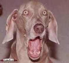 50 Best Funny Face Dogs Images Funny Animals Funny Animal Funny Dogs