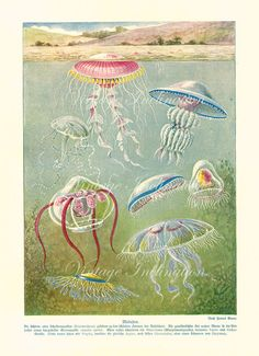 Antique Print 1900 Marine Life Chart by VintageInclination on Etsy, $35.00