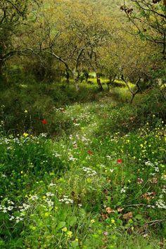 Wiese im Wald flower garden wildflower meadow Spring Photography, Landscape Photography, Nature Photography, Photography Flowers, All Nature, Dream Garden, Meadow Garden, Forest Garden, Garden Cottage