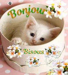 ᐅ 117 Bonjour images, photos et illustrations pour facebook - BonnesImages Kittens Cutest, Cats And Kittens, Good Morning Beautiful Pictures, Tu Me Manques, Fancy Cats, Happy Friendship Day, Bon Weekend, Ancient Egyptian Art, Morning Greeting