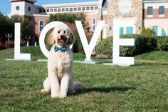 #LOVEVA #Brambleton The Virginia Toursim Department's LOVEworks will be returning to Brambleton Town Center tomorrow, May 22 - June 1. Isn't Waylon here a cutie?