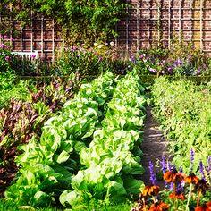 Garden Ideas & Projects - The Home Depot Planting Vegetables, Growing Vegetables, Vegetable Garden, Herb Garden, Grow Organic, Organic Seeds, Lawn And Garden, Spring Garden, Organic Weed Control