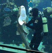 Shark Enjoys Belly Rub