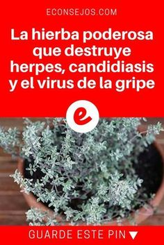 22 Best How To Get Rid of Herpes images in 2016   Herpes cure