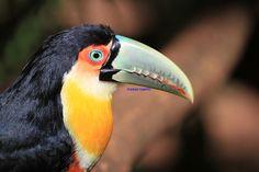 Bird Park, Foz Iguacu, Pr. Brazil   by Itamar Campos