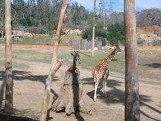 Wild Animal Park