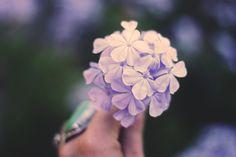 Pastel Purple Colour Pastel Purple, Art Photography, Silver Rings, Colour, Jewelry, Color, Fine Art Photography, Jewlery, Bijoux