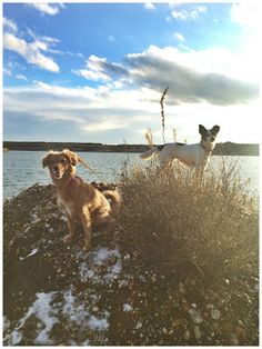 dog Hund Emmi & Sopa Serendipity is Life