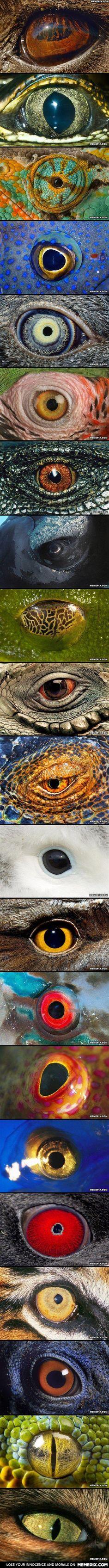 Closeup of animal eyes… trippy.