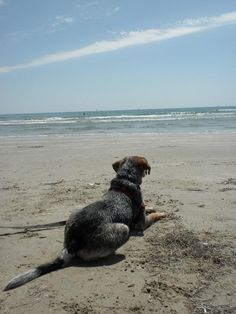 DogSitter Needed   Lake Braddock, Burke   Virginia United States  Aug 30,2013  For 5 days | Micro Term  Not a member? Join today to contact dogowner SAHome