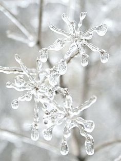 Beautiful and unique ice crystals - one of nature's wonders.