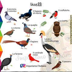 Italian Vocabulary, Learning Italian, Italy, Harry Potter, School, Spanish, Activities, Italian Language, Languages