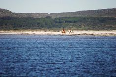Horse riders can often be seen galloping along the beach