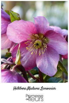 garten-stiefmütterchen ratgeber - 20 tipps zur richtigen pflanzung, Terrassen ideen